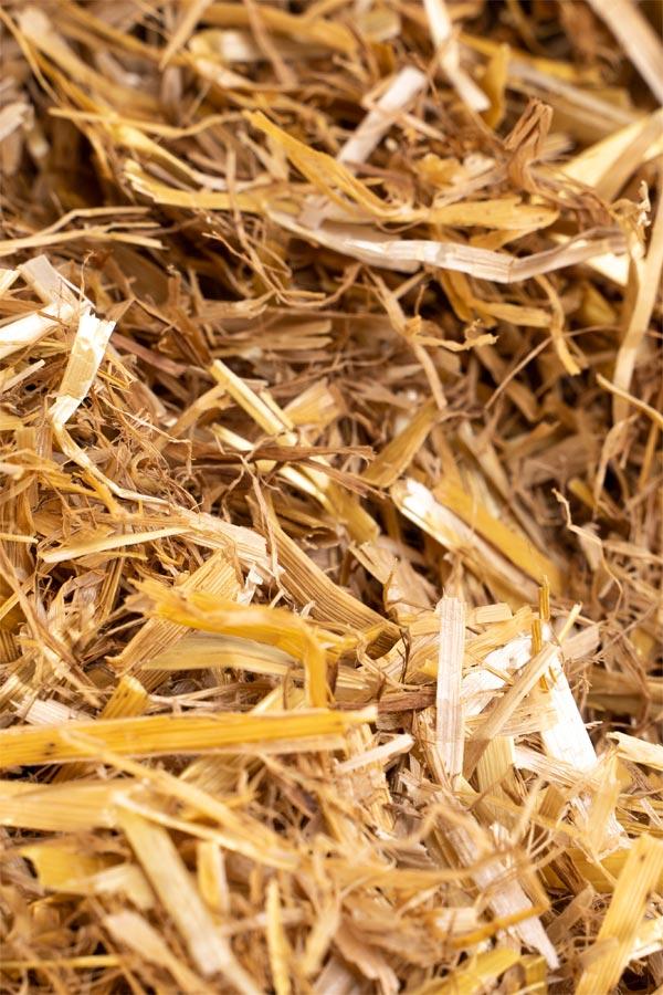 KosiBed Barley 3