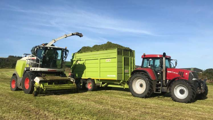 Pit Silage